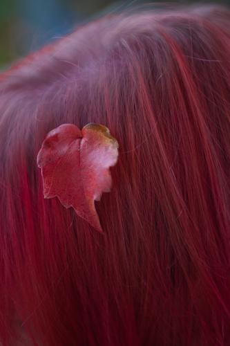 herbst rot Blatt Herbst Haare & Frisuren rosa Scheitel