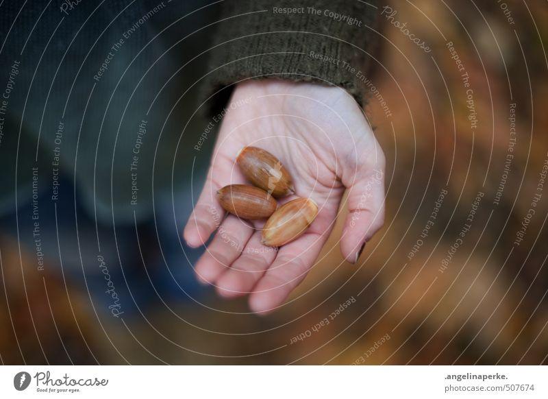 drei. Mensch Frau Hand Blatt Erwachsene Herbst gehen träumen wandern Kommunizieren beobachten Mitte Nuss