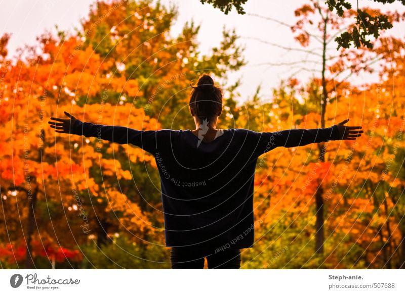 Den Herbst mit offenen Armen empfangen. feminin 1 Mensch Natur Baum Dutt genießen Liebe Umarmen warten außergewöhnlich frei Glück natürlich mehrfarbig gelb