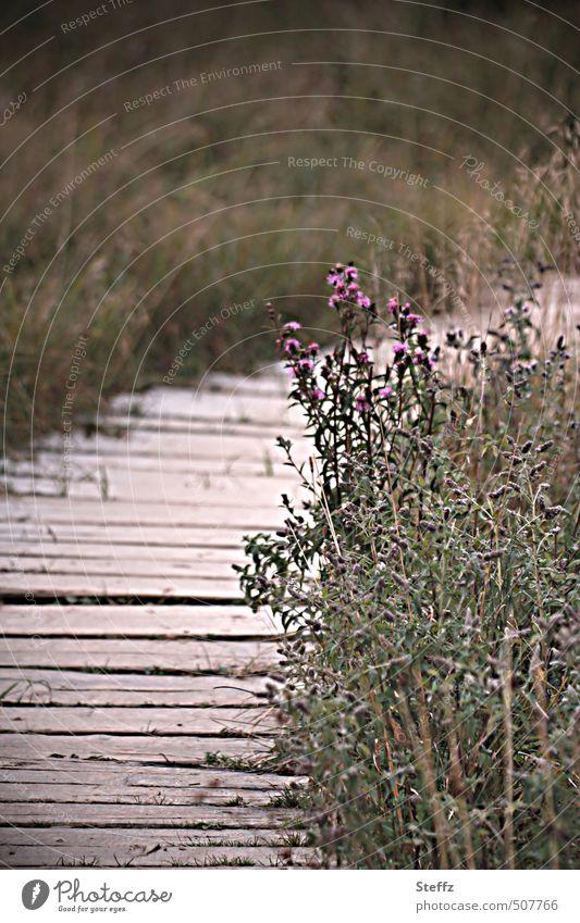 auf dem Holzweg Natur Pflanze Sommer Landschaft ruhig Wiese Wege & Pfade Gras Holz Sträucher wandern Spaziergang Fußweg Richtung Holzbrett Spazierweg