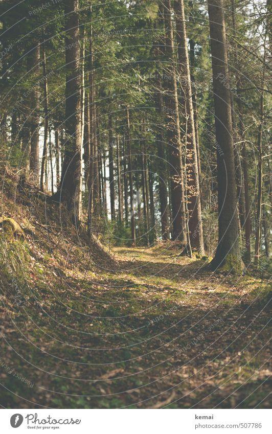 Waldweg Natur Pflanze Sommer Baum Einsamkeit Erholung Landschaft ruhig Blatt Umwelt Wärme Herbst Wege & Pfade Schönes Wetter Ausflug
