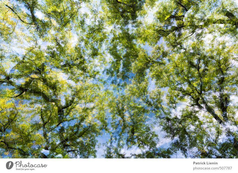 Revisit | 10 Natur Pflanze Sommer Baum Einsamkeit Landschaft Wald Umwelt Frühling Freiheit träumen Luft Zufriedenheit Design Klima Schönes Wetter