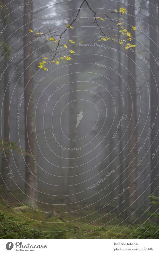 Herbstlich(t) Natur alt grün Pflanze Baum Erholung ruhig Blatt Wald dunkel kalt natürlich außergewöhnlich braun Nebel
