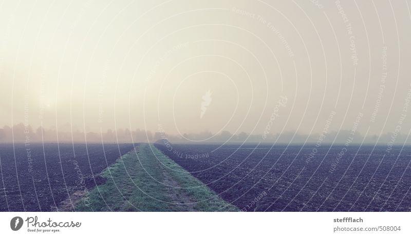 Nebel Sonnenaufgang ruhig Erntedankfest Landschaft Erde Himmel Sonnenuntergang Herbst Klimawandel Nutzpflanze Feld Menschenleer Wege & Pfade dunkel braun gelb