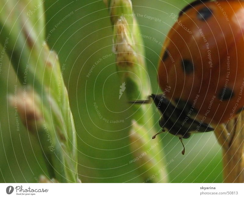 Maienkäfer in action Biologie Natur Käfer Nahaufnahme Punkt