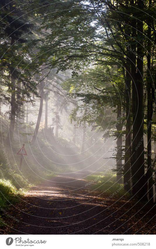 Morgengrauen Natur schön Sommer Landschaft Wald Umwelt Wege & Pfade Stimmung leuchten wandern frisch Zukunft Urelemente neu rein Mischwald