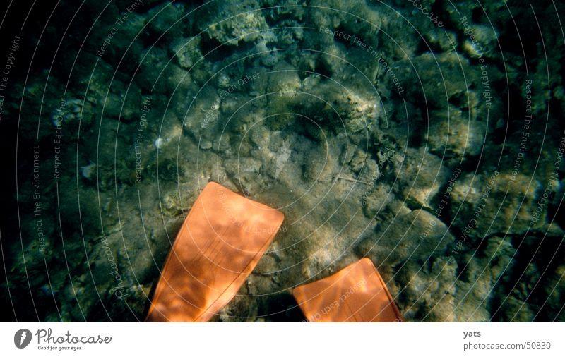 Donald oder Daisy? Wasser Meer orange tauchen Ente Schwimmhilfe Schnorcheln Meeresboden