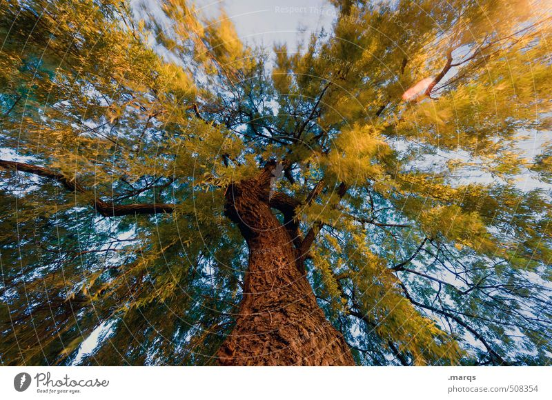 Tree of Life Himmel Natur Pflanze Sommer Baum Umwelt Leben Herbst außergewöhnlich groß Klima Perspektive verrückt Macht Wandel & Veränderung