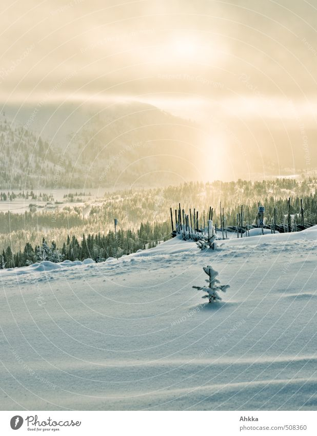golden winter Leben Zufriedenheit Sinnesorgane Ferien & Urlaub & Reisen Tourismus Ausflug Abenteuer Ferne Natur Landschaft Winter Schnee Wald Duft leuchten