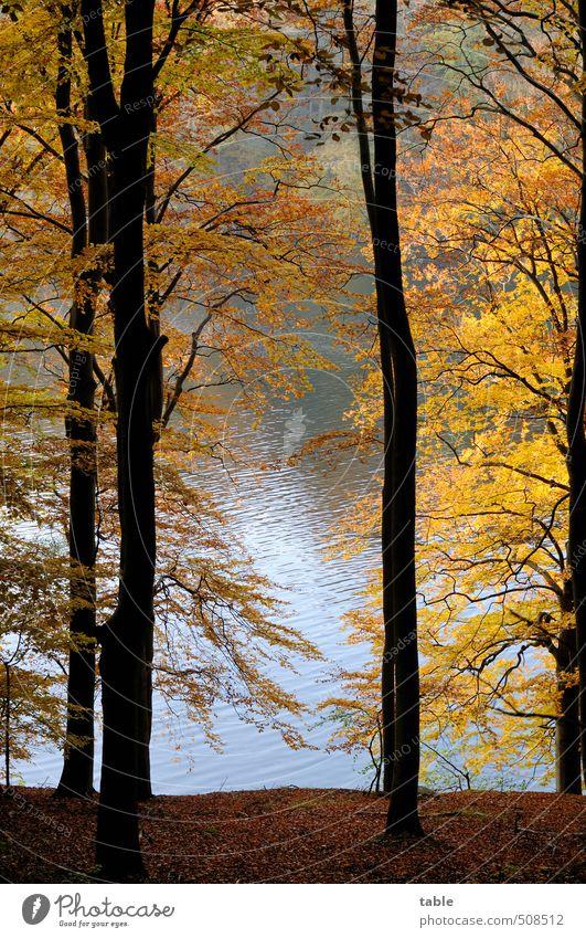 Stille Natur Ferien & Urlaub & Reisen blau Wasser Pflanze Baum Erholung Landschaft ruhig Wald gelb Umwelt Herbst See natürlich braun