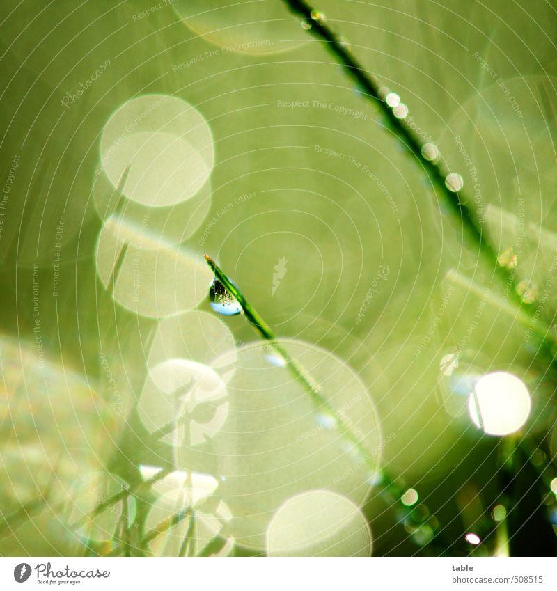 Glitzerwelt Umwelt Natur Landschaft Pflanze Urelemente Wasser Wassertropfen Frühling Sommer Herbst Schönes Wetter Gras Grünpflanze Nutzpflanze Wildpflanze Wiese