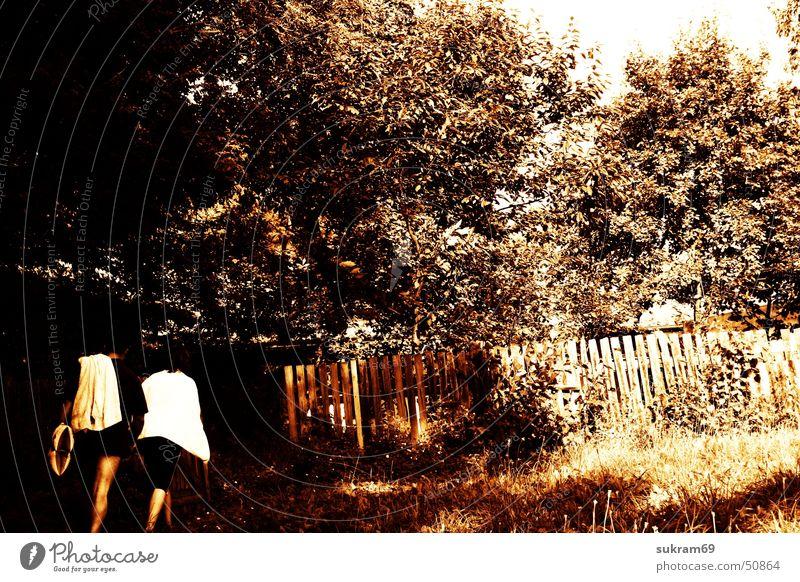 Badegäste Natur Baum Sommer Wiese Garten Landschaft Tor Hecke Gartentor Badegast