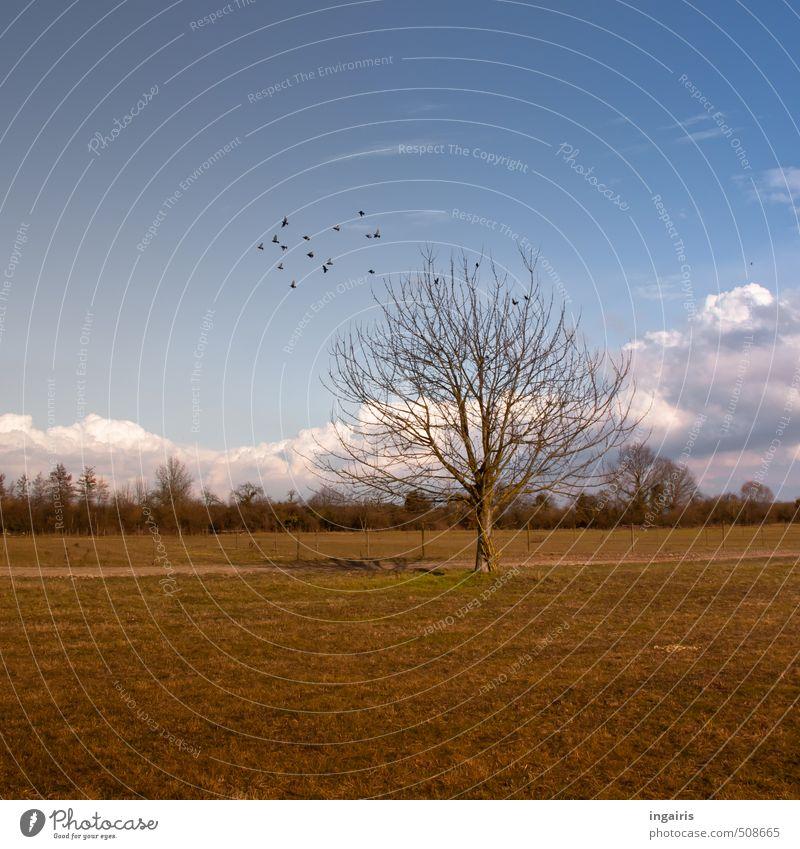 Ländlich Natur Landschaft Himmel Wolken Herbst Winter Pflanze Baum Gras Feld Tier Vogel Schwarm Erholung fliegen natürlich blau braun gelb grün schwarz weiß