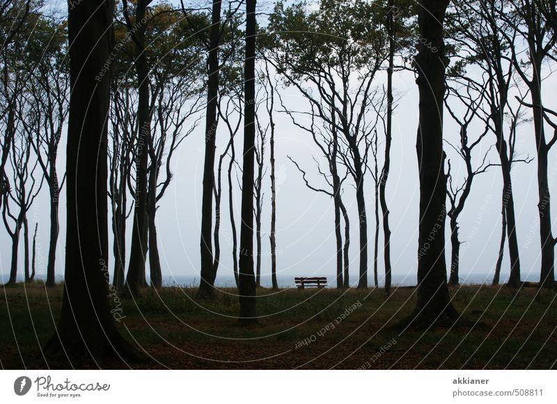 """Gespensterwald Nienhagen Baum Wald Küste Ostsee """"Baum Bäume Stamm Stämme Baumstamm Baumstämme Buche Buchen Buchenwald Wald Wälder Wäldchen forest Waldboden"""