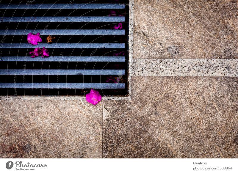 Buntkalter Herbst Pflanze Frühling Sommer Blume Blatt Grünpflanze exotisch Stein Beton Metall Rost Linie Streifen blau braun grau rosa schwarz Marmor Gitterrost