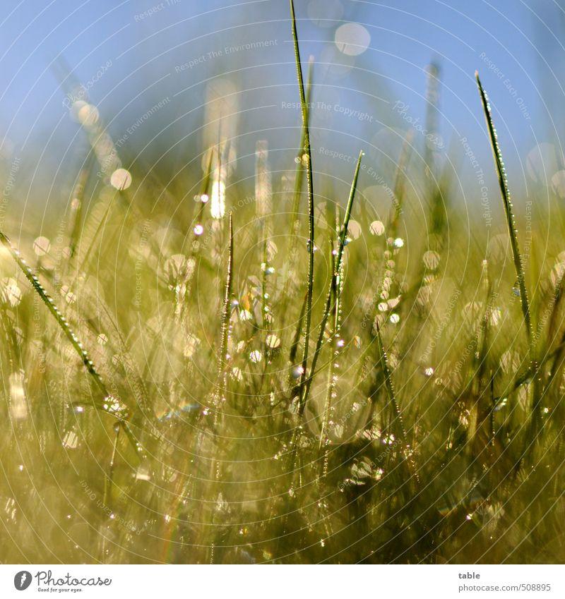 Morgenstund . . . Umwelt Natur Landschaft Pflanze Wasser Wassertropfen Himmel Wolkenloser Himmel Frühling Sommer Herbst Schönes Wetter Gras Grünpflanze