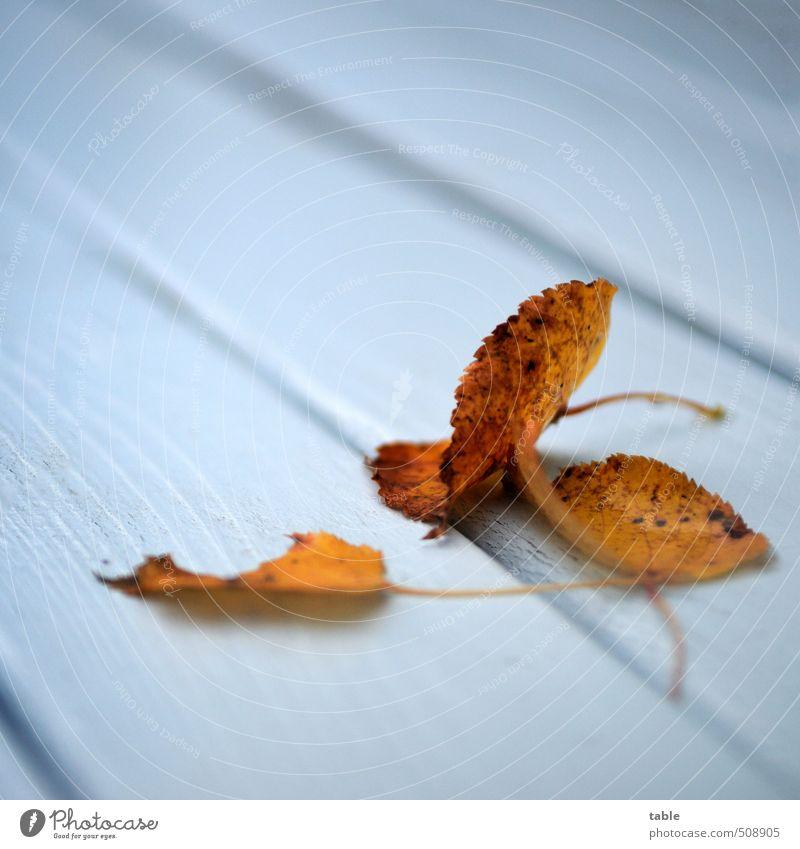 abgelegt . . . Natur blau alt weiß Farbe ruhig Blatt kalt Umwelt Herbst Holz klein Garten Linie liegen braun