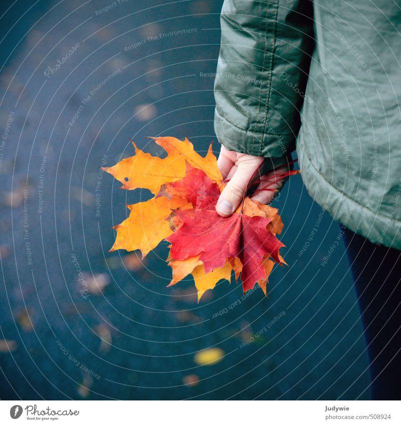 Herbst-Fundstücke Jugendliche blau Farbe Pflanze Erholung Junge Frau Blatt gelb Umwelt Straße Wege & Pfade natürlich orange wandern Finger
