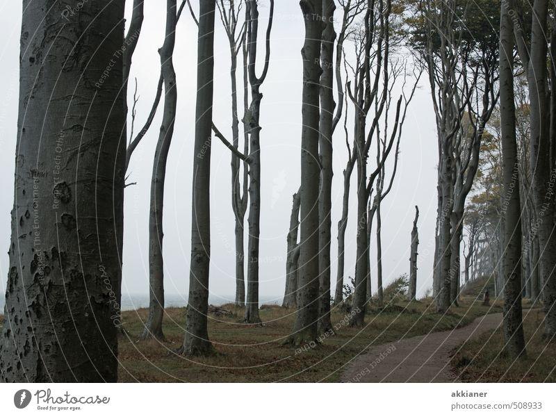 Waldweg Umwelt Natur Landschaft Pflanze Urelemente Erde Herbst Baum Küste dunkel gruselig natürlich Gespensterwald Fußweg Farbfoto Gedeckte Farben Außenaufnahme