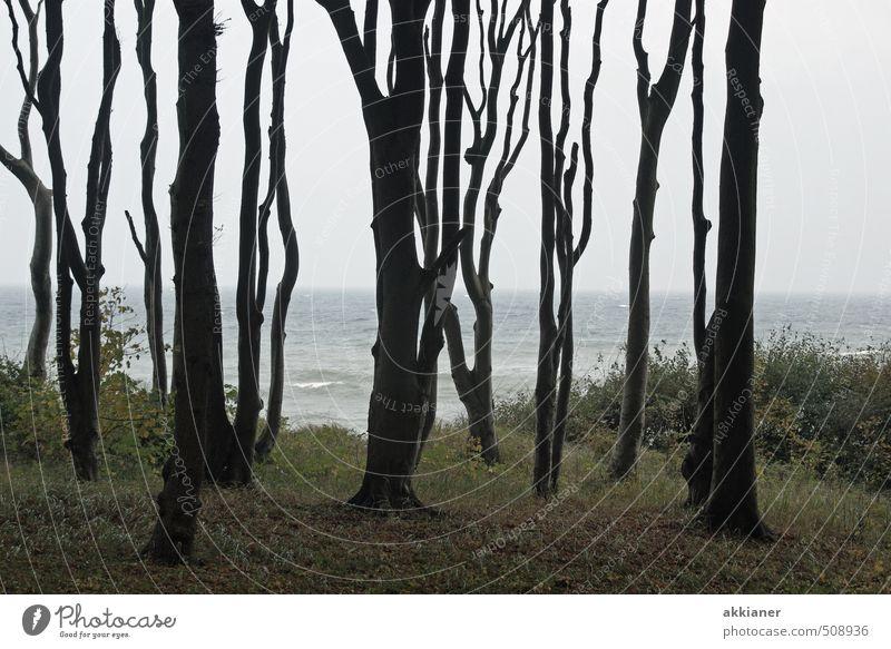 Gespensterwald II Umwelt Natur Landschaft Pflanze Himmel Herbst Baum Wald natürlich Buchenwald Farbfoto Gedeckte Farben Außenaufnahme Tag Licht