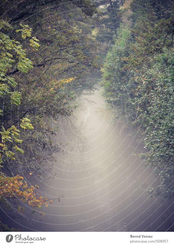 Nebulöses Gewässer grün Wasser Pflanze Baum rot Ferne gelb Herbst grau Stimmung braun trist Sträucher Ast Herbstlaub Bach