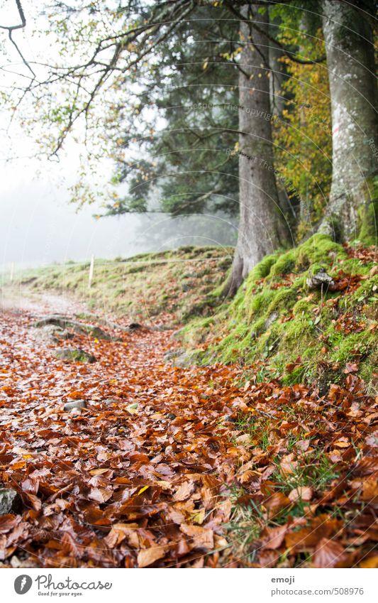 Herbstrot Natur Pflanze Baum rot Landschaft Blatt Umwelt Herbst natürlich Moos Laubwald
