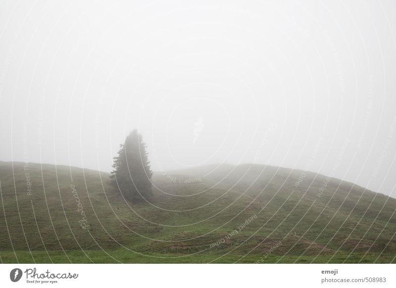 Oh Tannenbaum Umwelt Natur Landschaft Pflanze Himmel Herbst schlechtes Wetter Nebel Baum Grünpflanze Wiese Feld natürlich grau grün Farbfoto Gedeckte Farben