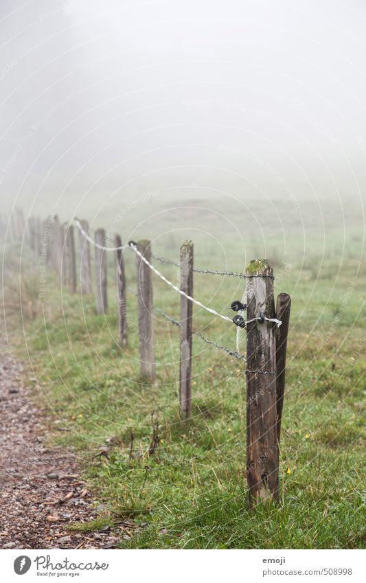 ich hab auch so eins Umwelt Natur Landschaft Herbst schlechtes Wetter Nebel Feld natürlich grau grün Zaunpfahl ländlich Farbfoto Gedeckte Farben Außenaufnahme