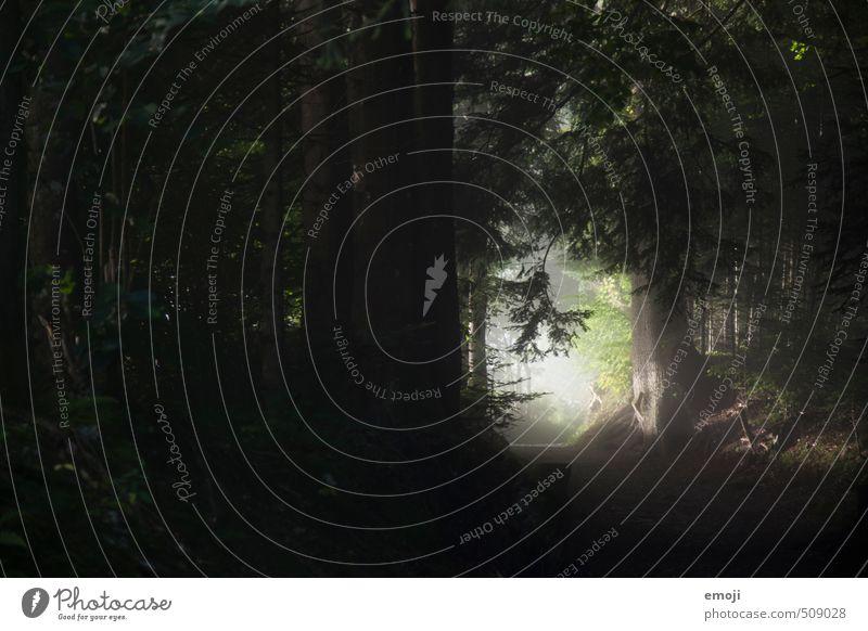 mystisch Natur Baum Landschaft Wald dunkel Umwelt natürlich Sträucher gruselig