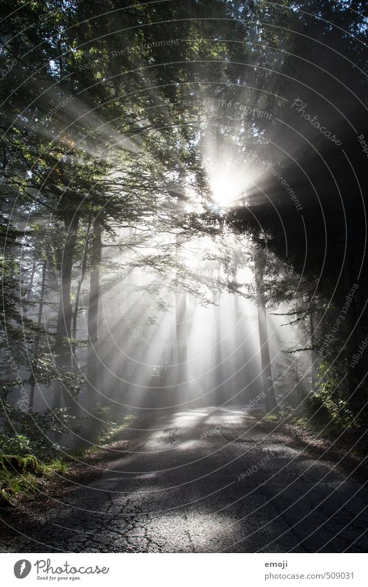 Flutlicht Umwelt Natur Landschaft Pflanze Nebel Baum Wald außergewöhnlich Farbfoto Gedeckte Farben Außenaufnahme Menschenleer Morgen Tag Licht Schatten