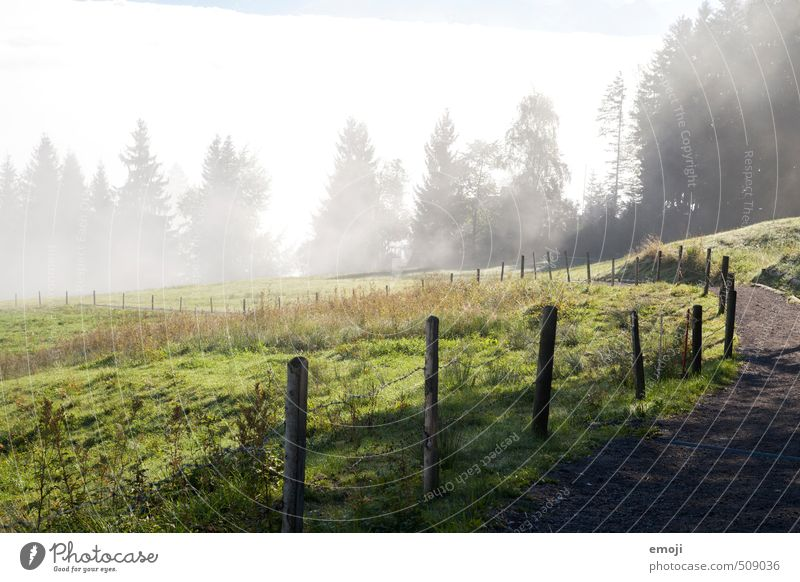 Gegensatz Natur grün Landschaft Umwelt Wiese Herbst natürlich Feld Nebel Zaun Nebelgrenze