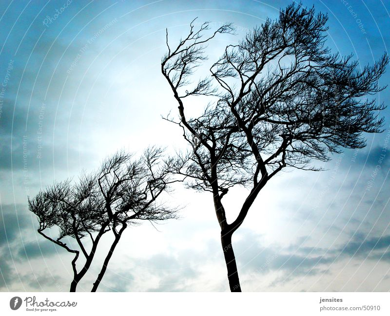 Ostseepalmen Natur Himmel Baum blau Winter kalt grau Deutschland Wind Ast Dynamik Ostsee ungemütlich Windflüchter