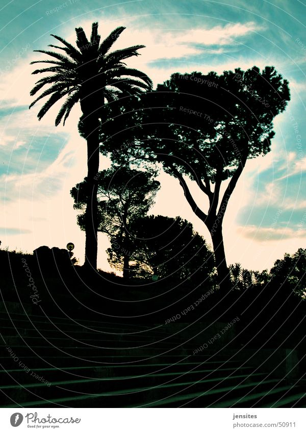 Palma Roma Natur Himmel Baum Wolken Italien Urwald Palme mediterran Mittelmeer
