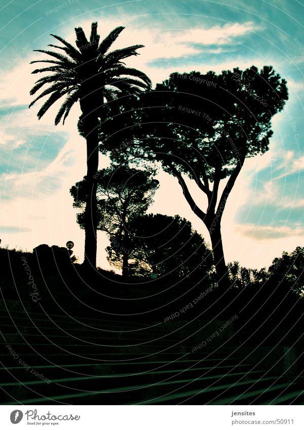 Palma Roma Palme Baum Italien Wolken Gegenlicht Außenaufnahme mediterran Urwald Natur Himmel Mittelmeer