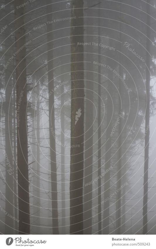 Nebelwald wandern Umwelt Natur Herbst schlechtes Wetter Baum Wald bedrohlich dunkel kalt grau schwarz Senior Einsamkeit Endzeitstimmung Vergänglichkeit