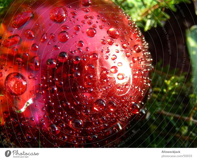 Weihnachtlicher Morgentau Weihnachten & Advent rot Wassertropfen nass Seil frisch rund Dekoration & Verzierung Kugel feucht Tau Vorfreude Weihnachtsdekoration