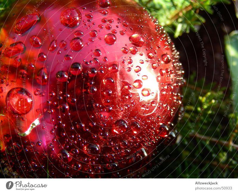 Weihnachtlicher Morgentau Weihnachten & Advent rot Wassertropfen nass Seil frisch rund Dekoration & Verzierung Kugel feucht Tau Vorfreude Weihnachtsdekoration benetzt