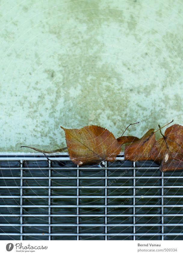 hängenbleiben Stadt weiß Wasser Blatt schwarz Herbst grau Metall braun nass Beton Brunnen unten gefangen silber Abfluss