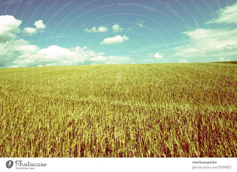 weizenfeld Wiese Arbeit & Erwerbstätigkeit Lebensmittel Feld Landwirtschaft Ernte Ackerbau Bioprodukte Forstwirtschaft Biologische Landwirtschaft Kornfeld Gartenarbeit Weizen Fortschritt füttern Vegetarische Ernährung