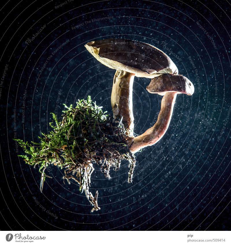 völlig losgelöst Umwelt Natur Pflanze Moos Wurzel blau braun grün Gesunde Ernährung Pilz Pilzhut röhrling Maronenröhrling Schweben Staub 2 abstrakt Farbfoto