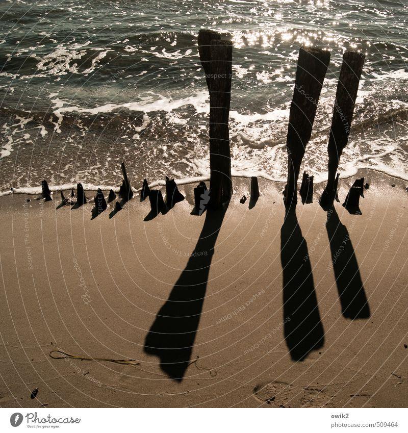 Alter Damm Natur alt Wasser Landschaft Strand Umwelt Holz Sand Zusammensein glänzend leuchten Wellen stehen Spitze Klima Vergänglichkeit