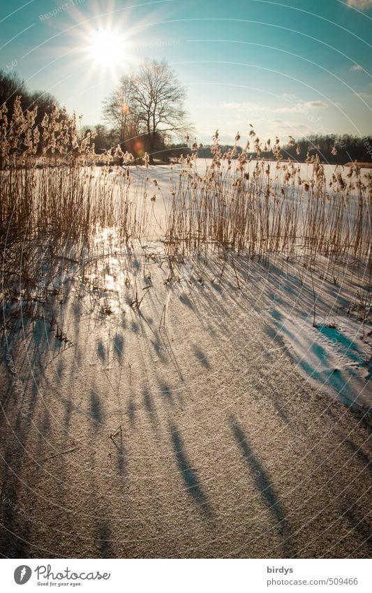 Alle Jahre wieder Himmel Natur schön Sonne Baum ruhig Winter Schnee See Eis Idylle leuchten Schönes Wetter ästhetisch Frost Seeufer
