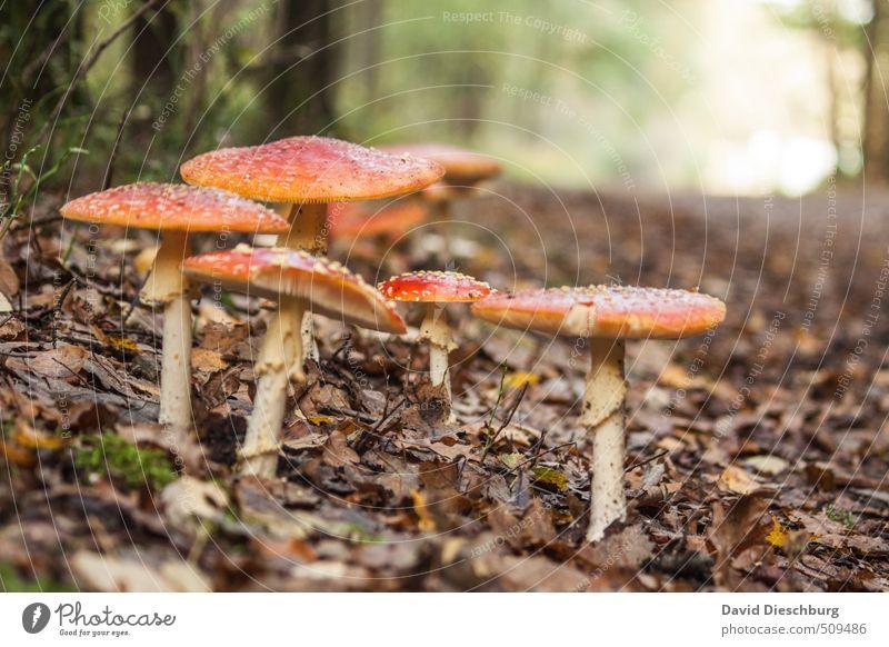 Giftige Familienverhältnisse Natur grün weiß Pflanze Baum rot Blatt Tier Wald gelb Herbst Wege & Pfade Frühling braun orange Sträucher