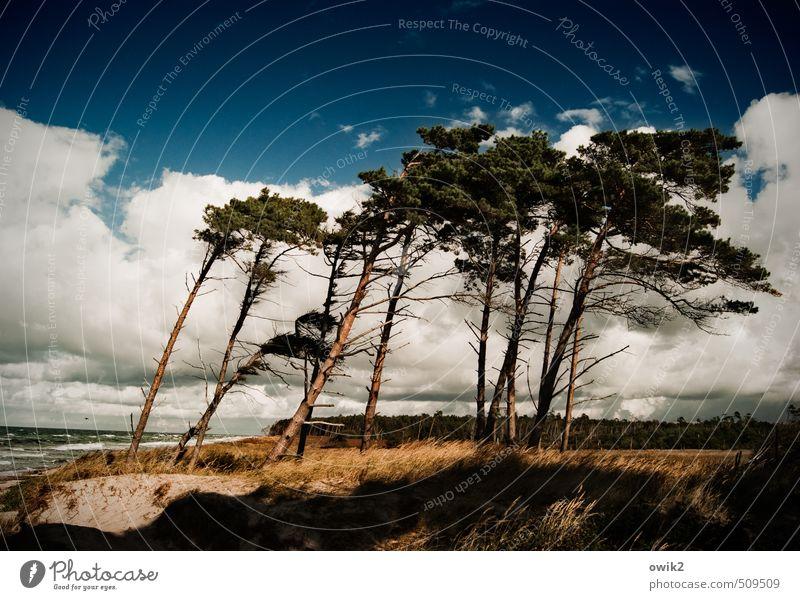 Rechts das Bein Umwelt Natur Landschaft Pflanze Wasser Himmel Wolken Horizont Klima Schönes Wetter Wind Sturm Baum Sträucher Windflüchter Nadelbaum Küste Ostsee