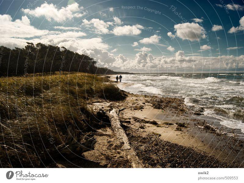 Strandgang Mensch Frau Himmel Natur Mann Pflanze Wasser Baum Landschaft Wolken Ferne Erwachsene Umwelt Gras Küste Freiheit