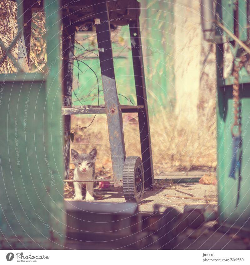Geh nicht Katze schön grün Tier gelb Tierjunges grau hell braun Angst Idylle stehen warten Schönes Wetter Hoffnung Hilfsbereitschaft