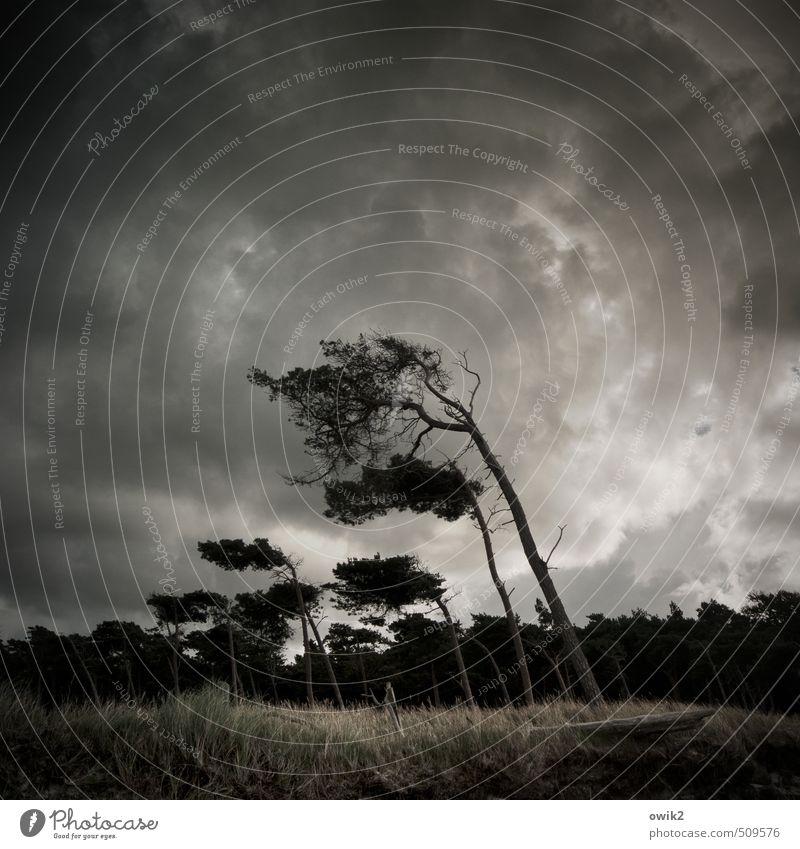 Links das Bein Umwelt Natur Landschaft Pflanze Himmel Wolken Gewitterwolken Horizont Klima Wetter Schönes Wetter Wind Sturm Baum Sträucher Windflüchter