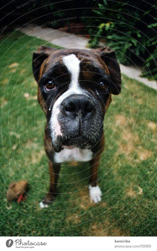 otis Hund Wiese Gras Tier Trauer dog alt old animal pet Traurigkeit Tränen