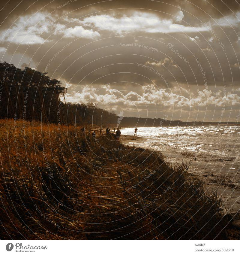 Wind und Wetter Mensch Natur Ferien & Urlaub & Reisen Pflanze Baum Erholung Landschaft Ferne Strand Umwelt Gefühle Gras Küste Spielen Menschengruppe Freiheit