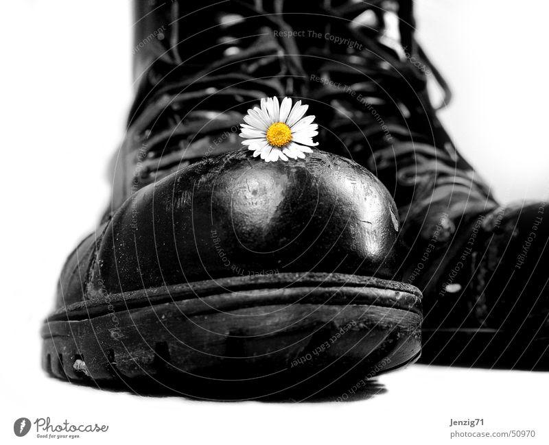 Harte Schale. Stiefel Schuhe Schnürstiefel Springerstiefel Gänseblümchen Blume Gewalt